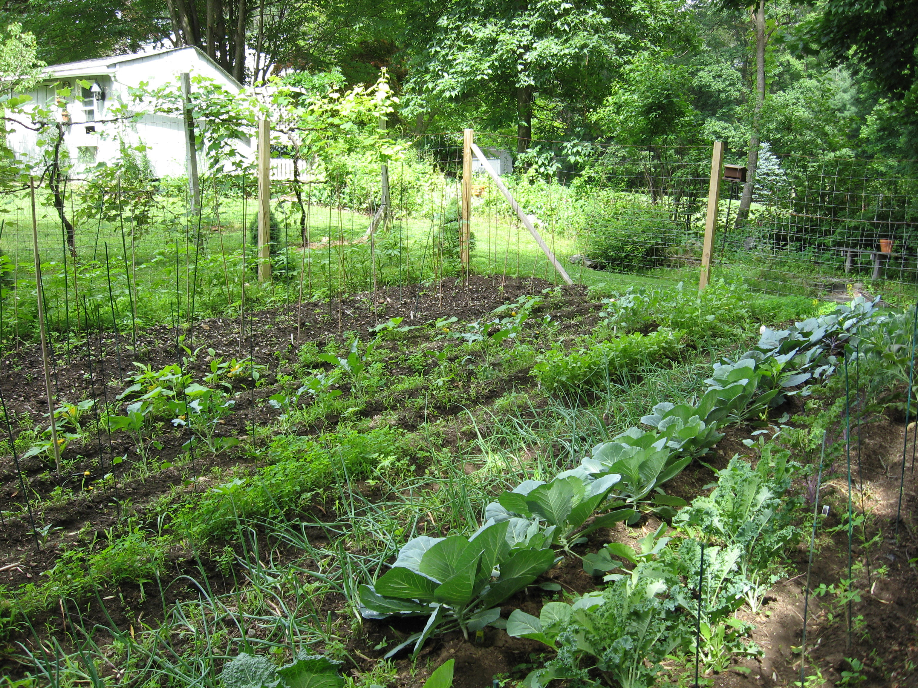 The Mittleider Method of Gardening Catholic Rural Solutions Blog
